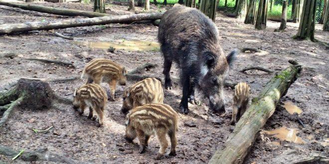 Wildschweingehege im Fürther Stadtwald: Adresse, Anfahrt, Parken