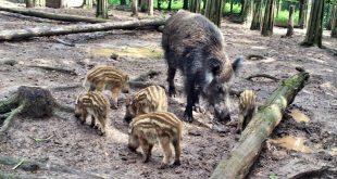 In und um Zirndorf locken etliche Ausflugsziele. Viele sind kostenlos - etwa das Wildschweingehege nach der Alten Veste.