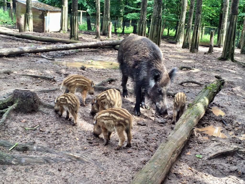 In und um Zirndorf locken etliche Ausflugsziele. Viele sind kostenlos - etwa das Wildschweingehege nahe der Alten Veste.