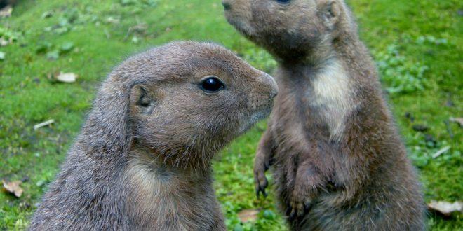 Mit dem Entdeckerpass sparen Sie 50 Prozent beim Eintrittspreis für den Tiergarten Nürnberg.
